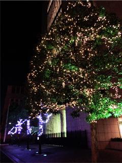 共立女子大学前のクリスマスツリー